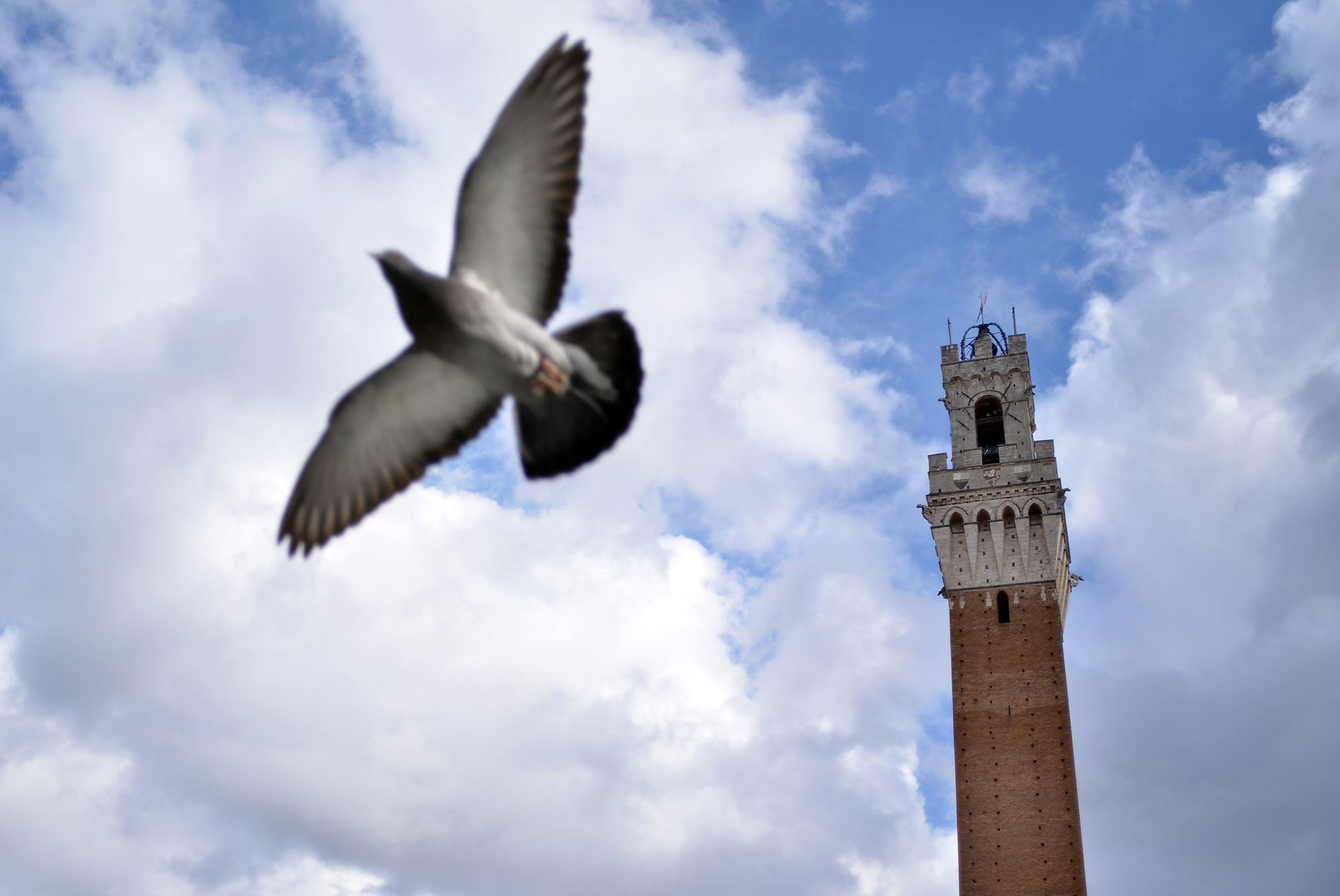 Michael McCollum3/15/13Pigeon and tower in Sienna Italy